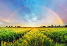 Ландшафт радуги сельский с пшеничным полем на заходе солнца Стоковая Фотография
