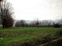 Ландшафт древесин осени Стоковое Изображение RF