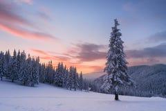 Ландшафт рождества с елью в снеге и домом в m Стоковые Изображения RF