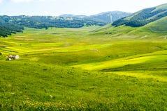 Ландшафт Рояля di Castelluccio Стоковые Изображения RF