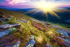Ландшафт рододендрона лета Стоковые Фото