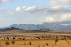 Ландшафт саванны в национальном парке в Кении Стоковое фото RF
