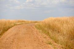 Ландшафт саванны в национальном парке в Кении Стоковое Изображение