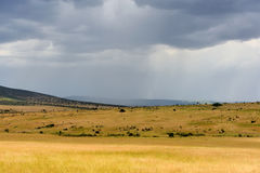 Ландшафт саванны в национальном парке в Кении Стоковая Фотография RF
