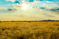 Ландшафт саванны на заходе солнца Стоковые Фотографии RF