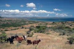 Ландшафт севера острова Мадагаскара Стоковая Фотография RF