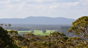 Ландшафт сени дерева Tingle: Западная Австралия Стоковое Фото