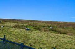 Ландшафт сельской местности Стоковые Изображения RF