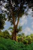 Ландшафт сиротливого зеленого дерева на холме Стоковые Фотографии RF