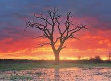 Ландшафт сиротливого старого дерева в луге против предпосылки яркого восхода солнца Стоковая Фотография RF