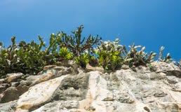 Ландшафт скалистой горы и дерева перед голубым небом Стоковое фото RF