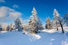 Ландшафт снега зимы, высокие фены, Бельгия Стоковое фото RF