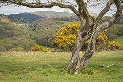Ландшафт старого дерева обрамляя Стоковая Фотография RF