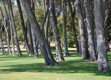 Ландшафт ствола дерева, укомплектовывая личным составом парк, западная Австралия Стоковые Фотографии RF