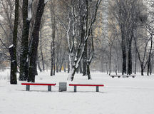 Ландшафт Стенды в садах во время снежностей Стоковое Изображение