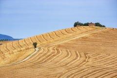 Ландшафт страны в мартах (Италия) Стоковые Изображения RF