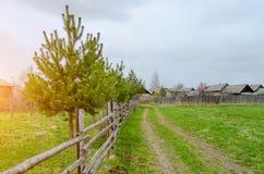 Ландшафт страны сосны и дорога загородки сельская в зеленом поле Стоковые Фото