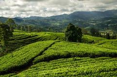 Ландшафт страны холма, Шри-Ланка Стоковое Изображение