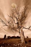 Ландшафт сумрака в тонах sepia Стоковые Изображения