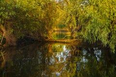 Ландшафт с водой и вегетацией в перепаде Дуная стоковая фотография rf