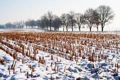 Ландшафт с вспаханными кукурузным полем и переулком в зиме Стоковые Изображения