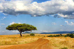 Ландшафт с деревом в Африке стоковая фотография rf
