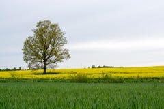 Ландшафт с деревом Стоковые Фото