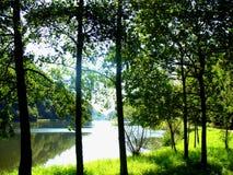 Ландшафт с деревьями и рекой (Rhein) стоковое изображение rf