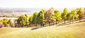 Ландшафт с деревьями на холме Стоковое Фото