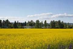 Ландшафт с желтыми цветками Стоковое фото RF