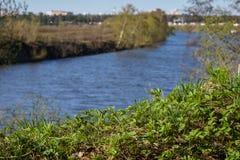 Ландшафт с зеленой травой Стоковая Фотография RF