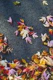 Ландшафт с листьями осени Ретро фильтр стиля, кленовые листы Стоковое Фото