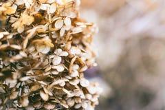 Ландшафт с листьями осени цвета полными и светом солнца осени, Re Стоковая Фотография RF