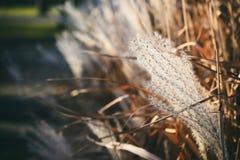 Ландшафт с листьями осени цвета полными и светом солнца осени, Re Стоковая Фотография