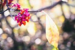 Ландшафт с листьями осени цвета полными и светом солнца осени, Re Стоковые Изображения
