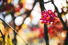 Ландшафт с листьями осени цвета полными и светом солнца осени, Re Стоковое Изображение
