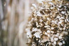 Ландшафт с листьями осени цвета полными и светом солнца осени, Re Стоковое фото RF