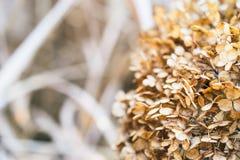 Ландшафт с листьями осени цвета полными и светом солнца осени, Re Стоковые Фото