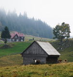 Ландшафт с коровами в румынских горах Стоковое Изображение RF