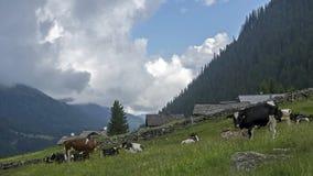 Ландшафт с коровами Стоковая Фотография RF
