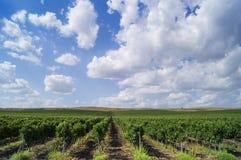 Ландшафт с красивыми болгарскими виноградниками Стоковая Фотография RF
