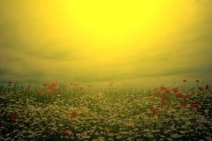 Ландшафт с маками и стоцветом в свете 7 захода солнца Стоковое Изображение RF
