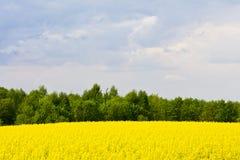 Ландшафт с облаками, деревья и рапс field во время цвести Стоковая Фотография RF