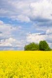 Ландшафт с облаками, деревья и рапс field во время цвести Стоковые Фото