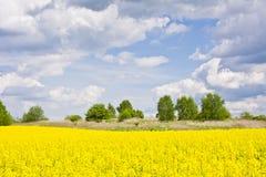 Ландшафт с облаками, деревья и рапс field во время цвести Стоковое Изображение RF