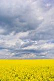 Ландшафт с облаками и рапс field во время цвести Стоковые Фотографии RF