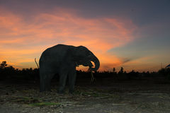 Ландшафт слона с красочным небом Стоковое Изображение