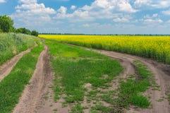 Ландшафт с дорогами земли на краю аграрного поля Стоковое Фото