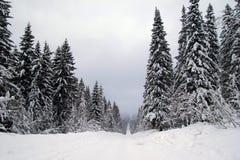 Ландшафт с дорогой и снегом покрыл ели Стоковое Фото