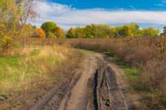 Ландшафт с пакостной дорогой земли на краю поля солнцецвета Стоковые Фото